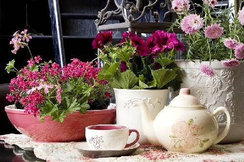 Цветы в Вашей квартире