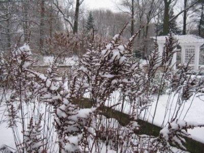 Как подготовить астильбу к зиме