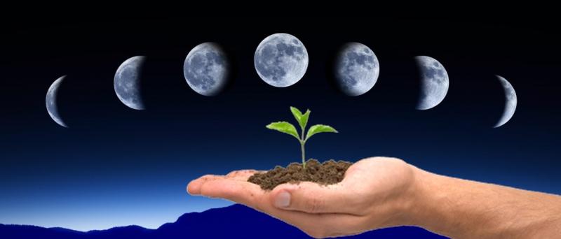 Лунный календарь садово-огородных работ на май 2019