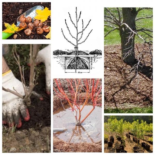 Лунный календарь садово-огородных работ на сентябрь 2019