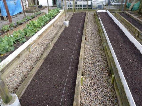 Многолетний лук-слизун — выращивание, посадка, размножение и уход