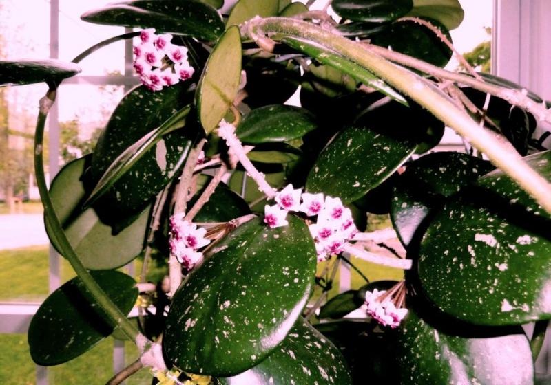 Опасные белые жучки в комнатных цветах: доступные способы избавления