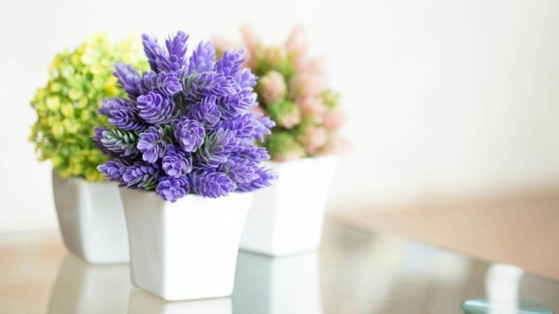 Польза и вред йода для растений, рассады и садово-огородных культур