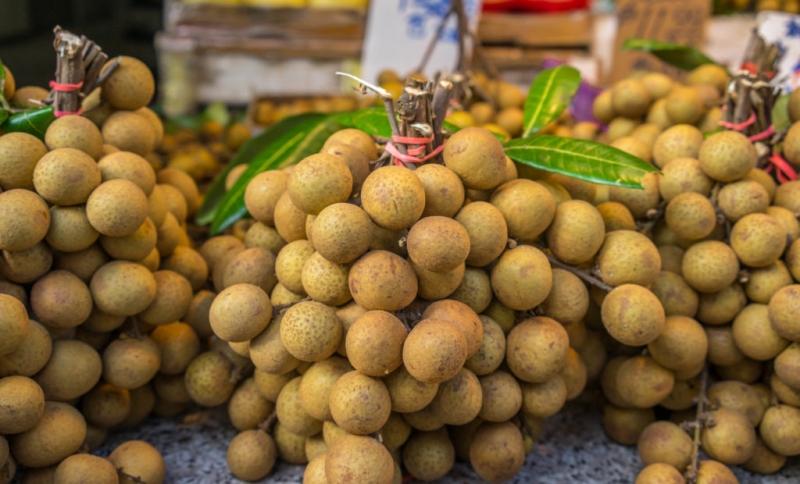 Растение лонган: выращивание из косточки и уход в домашних условиях