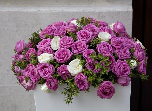 Выращиваем розы на балконе