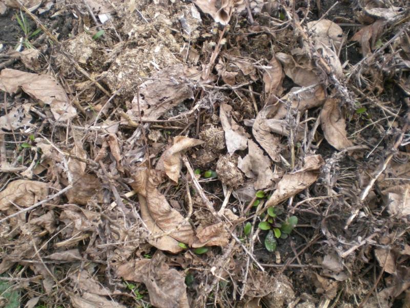 «Во саду ли в огороде»: ТОП-10 обязательных весенних работ на даче